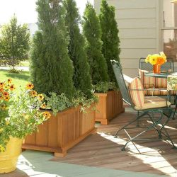 Awesome Fence With Evergreen Plants Landscaping Ideas 54