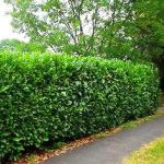 Awesome Fence With Evergreen Plants Landscaping Ideas 61