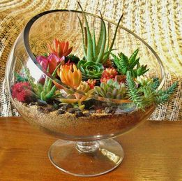 Beauty Succulents for Houseplant Indoor Decorations 2 1