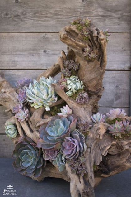 Beauty Succulents for Houseplant Indoor Decorations 24 1