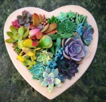 Beauty Succulents for Houseplant Indoor Decorations 25 1