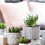 Beauty Succulents for Houseplant Indoor Decorations 5 1