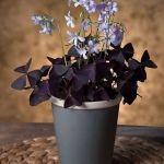 Beautiful Home Plant for Indoor Decorations 10