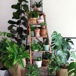 Beautiful Home Plant for Indoor Decorations 12