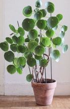 Beautiful Home Plant for Indoor Decorations 2