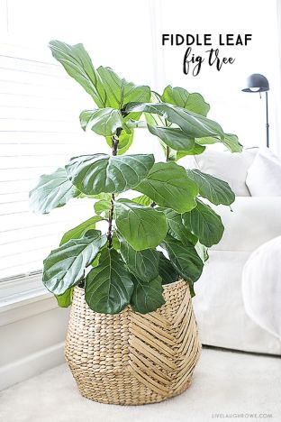 Beautiful Home Plant for Indoor Decorations 20