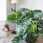 Beautiful Home Plant for Indoor Decorations 26
