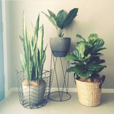 Beautiful Home Plant for Indoor Decorations 6