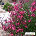 Texas Style Front Yard Landscaping Ideas 17