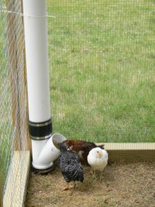 Chicken feeder from pvc 21