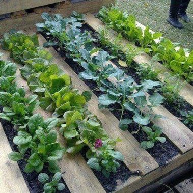 Amazing Creative Wood Pallet Garden Project 20