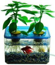 DIY Indoor Aquaponics Fish Tank Ideas 33