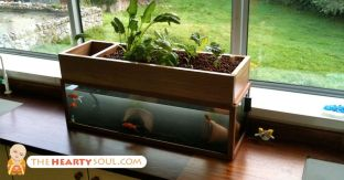 DIY Indoor Aquaponics Fish Tank Ideas 40
