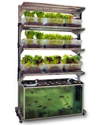 DIY Indoor Aquaponics Fish Tank Ideas 41
