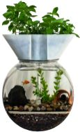 DIY Indoor Aquaponics Fish Tank Ideas 8