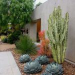 Stunning desert garden ideas for home yard 13