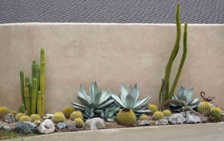Stunning desert garden ideas for home yard 22