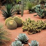 Stunning desert garden ideas for home yard 26