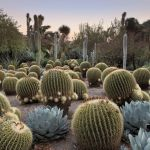 Stunning desert garden ideas for home yard 4