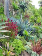 Stunning desert garden ideas for home yard 40