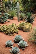 Stunning desert garden ideas for home yard 42