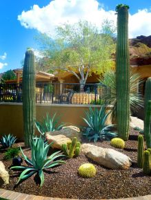 Stunning desert garden ideas for home yard 45