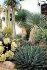 Stunning desert garden ideas for home yard 55