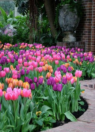 Beauty Tulips Arrangement for Home Garden 15