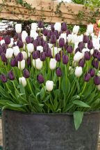 Beauty Tulips Arrangement for Home Garden 17