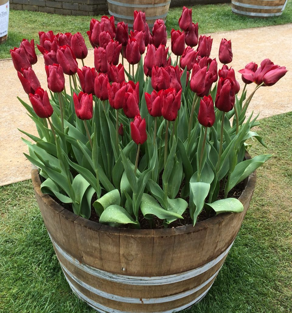 Beauty Tulips Arrangement for Home Garden 27
