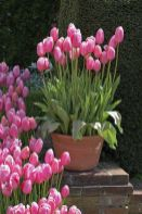 Beauty Tulips Arrangement for Home Garden 23