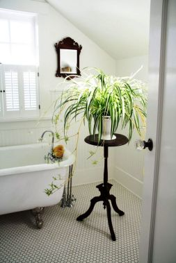 Cool Plant Stand Design Ideas for Indoor Houseplant 81