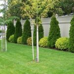 Stunning Privacy Fence Line Landscaping Ideas 38