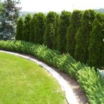 Stunning Privacy Fence Line Landscaping Ideas 53