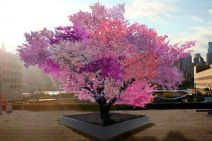 Beautiful Flowering Tree for Yard Landscaping 15