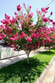 Beautiful Flowering Tree for Yard Landscaping 23