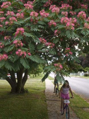 Beautiful Flowering Tree for Yard Landscaping 9