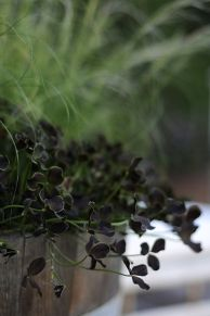 Spooky Plant and Flower Ideas to Make Perfect Goth Garden 17