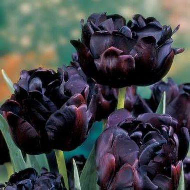 Spooky Plant and Flower Ideas to Make Perfect Goth Garden 32