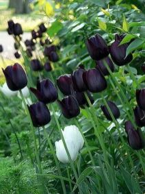 Spooky Plant and Flower Ideas to Make Perfect Goth Garden 46