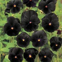 Spooky Plant and Flower Ideas to Make Perfect Goth Garden 53