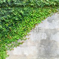 Impressive Climber and Creeper Wall Plants Ideas 15
