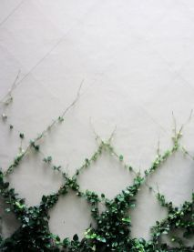 Impressive Climber and Creeper Wall Plants Ideas 17
