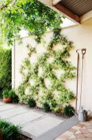 Impressive Climber and Creeper Wall Plants Ideas 21