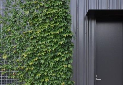 Impressive Climber and Creeper Wall Plants Ideas 32