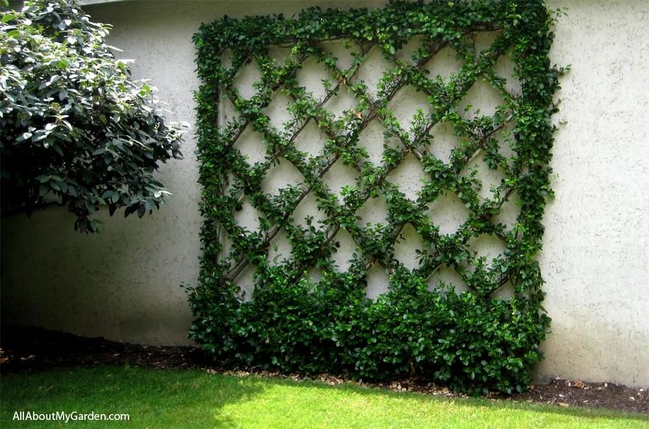 Impressive Climber and Creeper Wall Plants Ideas 1