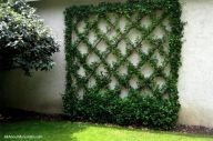 Impressive Climber and Creeper Wall Plants Ideas 4