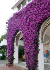 Impressive Climber and Creeper Wall Plants Ideas 42