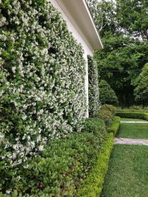 Impressive Climber and Creeper Wall Plants Ideas 50