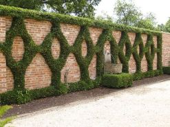 Impressive Climber and Creeper Wall Plants Ideas 54
